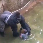 Harambe Live: Secrets to blowing up your company's social channels